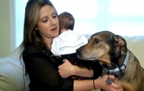 Когда-то они забрали эту собаку из приюта. Через несколько лет она отплатила им бесценной услугой...