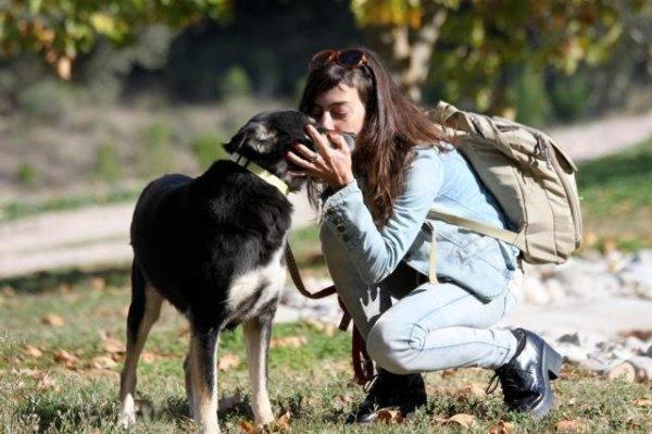 Собака превратилась в камень, но была спасена человеком