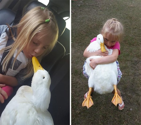 5-летняя девочка и её утка, которая считает девочку своей мамой и ходит за ней по пятам