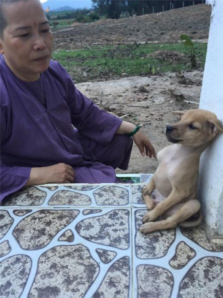 Бездомные щенки не могут перестать обниматься после того, как их спасли