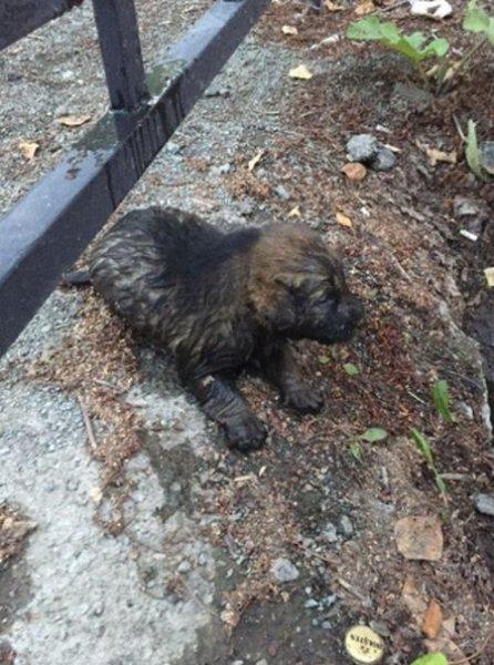 В Ревде 12-летний мальчик спас щенка, едва не утонувшего в сточной канаве