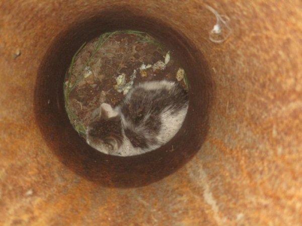 Для спасения котенка в Челябинске демонтировали фонарный столб