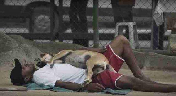 Приют для животных, в котором работают исключительно бомжи