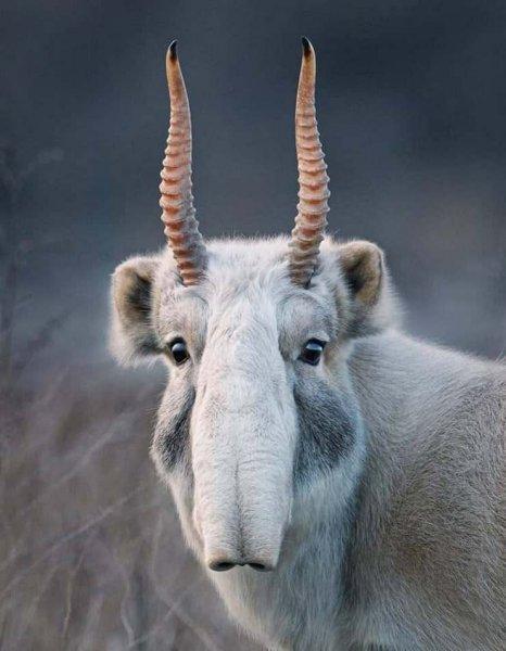 15 фотографий редких животных, которые доказывают, что природе ещё есть, чем нас удивить