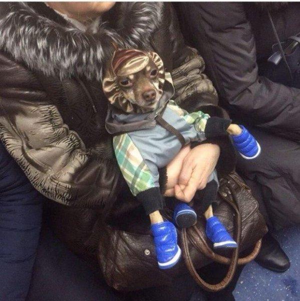 Модники Беларуси в погоне за хайпом
