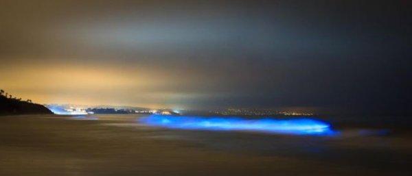 В Калифорнии океан стал светиться голубым цветом
