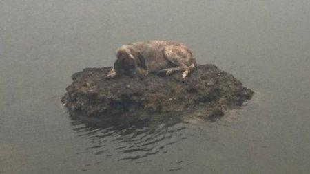 Собака забралась на камень в море, чтобы спастись от пожара