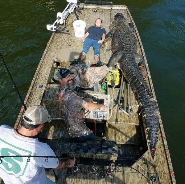 В Джорджии охотники поймали огромного аллигатора-динозавра