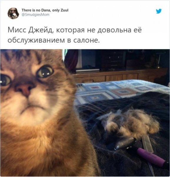 Неудачные снимки животных, на которые нельзя посмотреть без улыбки