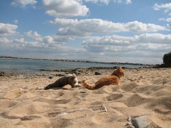 В Италии есть кошачий пляж, покоривший тысячи туристов